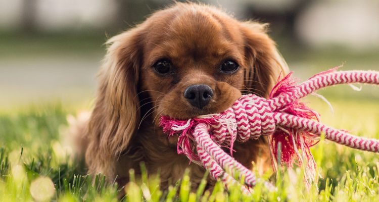 Therapeutic Boarding - Wag Central Dog Boarding, Daycare and