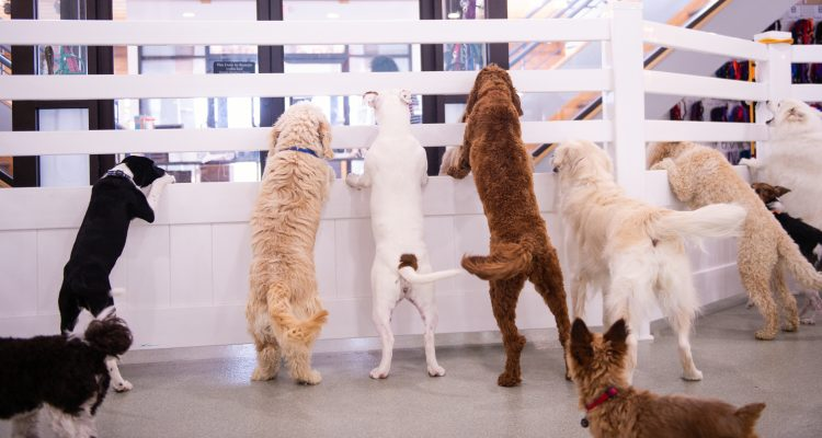 Wag The Weight Away - Wag Central Dog Boarding, Daycare and